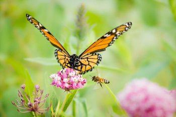 Simbiosis Mutualisme Bunga dengan Kupu-kupu