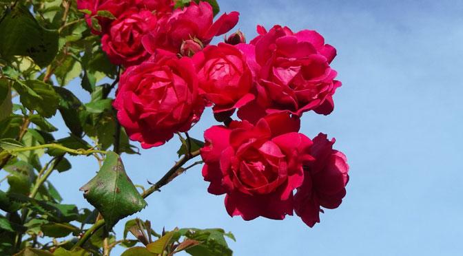 Flores en Gaiman, Chubut