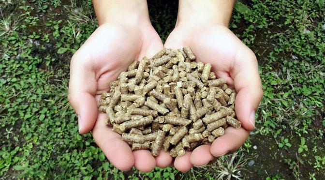 Investigadores del INTI obtienen combustible a partir de desechos de la caña de azúcar