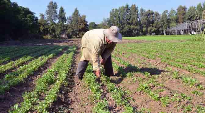 Producción de alimentos: cuando el cambio es discriminación