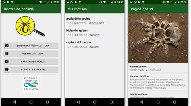 Una aplicación distingue especies peligrosas de arañas argentinas