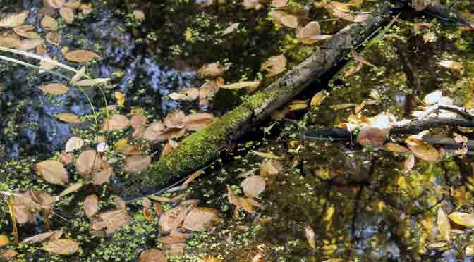 Vegetación acuática en el parque Ribera Norte, Acassuso, Buenos Aires