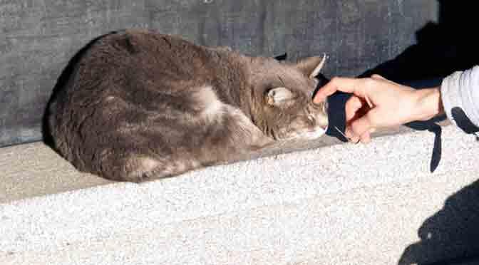 Siesta de un gato en el cementerio de la Recoleta