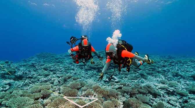 Científicos descubren 200.000 tipos de virus en los océanos