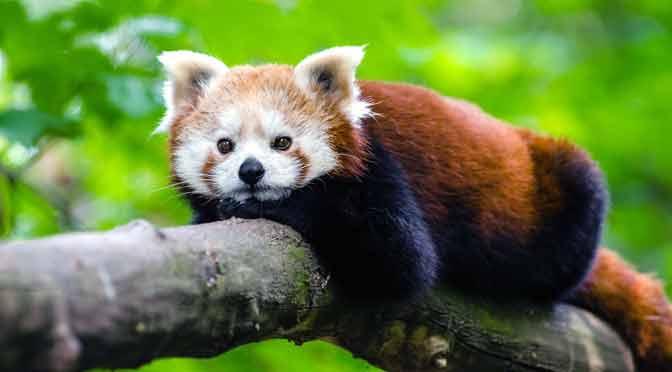 Advierten que un millón de especies están en peligro de extinción