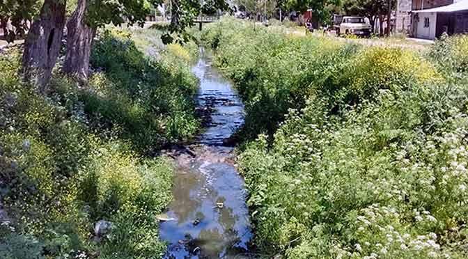Ecología: el renacer de los arroyos en el Gran Buenos Aires