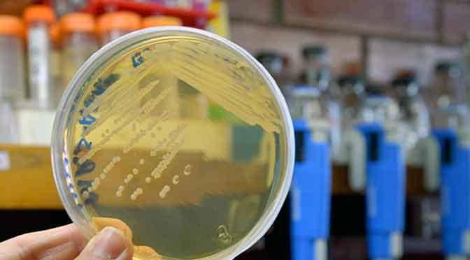Bacterias probióticas: un «lazo» saludable