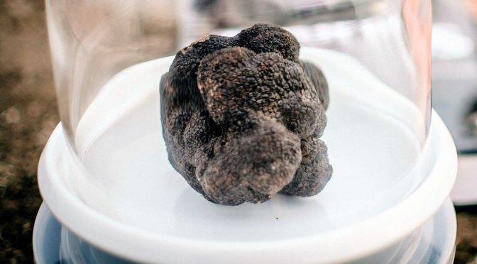 La trufa negra ya se exporta desde la Argentina