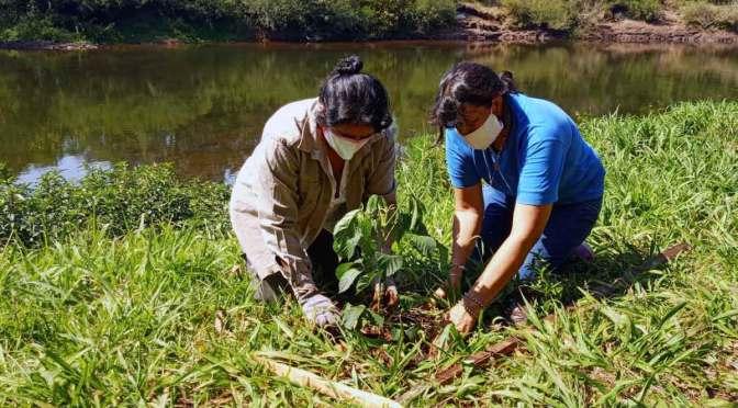 Hora de Obrar convoca a donar árboles para reforestar Misiones