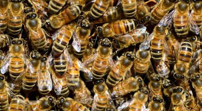 ¿Dónde están las abejas?