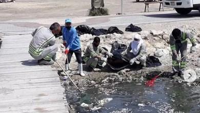 Photo of المجلس الأعلى للبيئة: أسباب نفوق الأسماك في قناة المعامير هي ظاهرة المد الأحمر