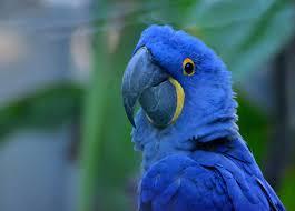 Azizia Bird Kingdom