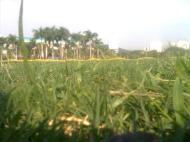 hutan rumput