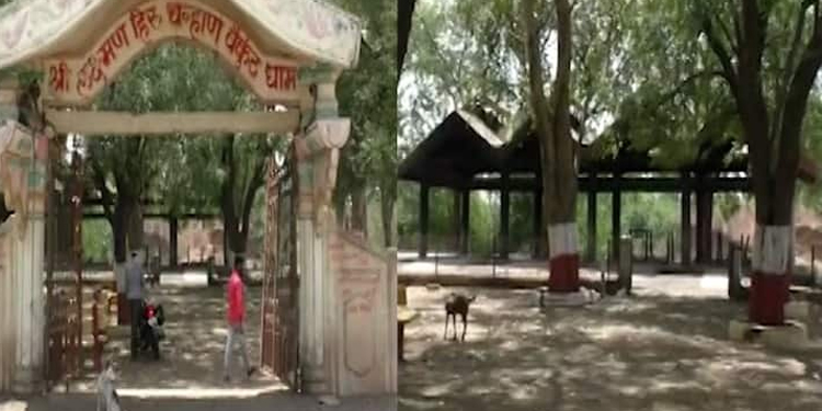 maharashtra news the bodies buried in cemetery dug up by stray dogs and brought to the streets shocking incident in buldhana