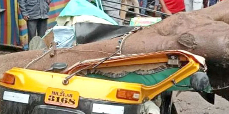 Latur News tree rickshaw collapsed and shattered driver was killed and one was injured