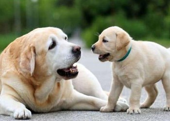 pune crime expensive to buy a puppy from facebook find out the case