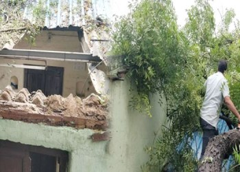 pune rain tree fall on home in kudale chal of hadapsar area in pune
