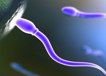 Sperm Count low testosterone levels fall in sperm count fat gain