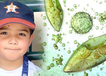 Brain-Eating Amoeba   young boy dies after brain eating amoeba gets into skull at water park