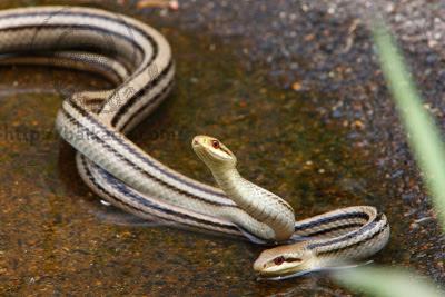 Snake center