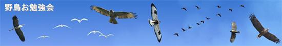 野鳥お勉強会~フィールドで出会う爬虫類や両生類~