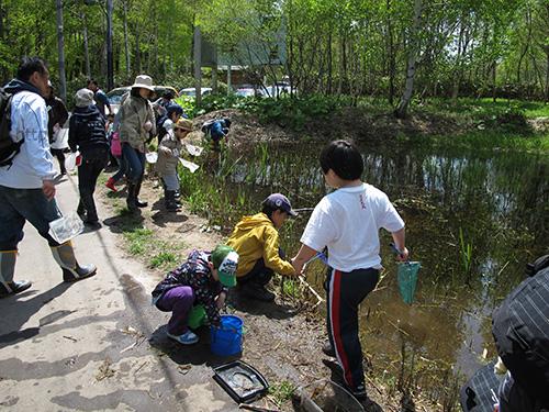 野幌で子供に紛れてオタマジャクシすくってきました