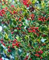 CHRISTMAS (P)RESERVE @ Denso Marsten Nature Reserve