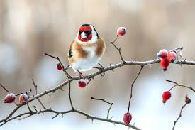 Winter Birds Workshop @ Denso Marsten Nature Reserve