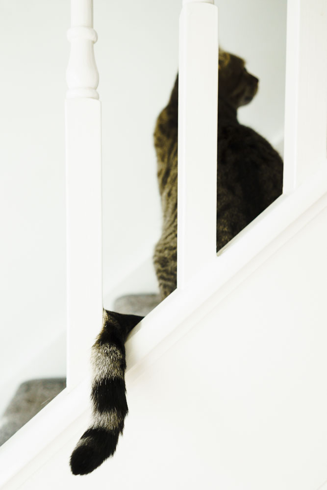 Cat tail pokes through the spindles on the staircase