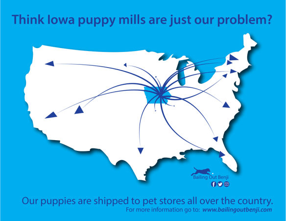 Iowa Puppy Mills by the Numbers | Bailing Out Benji