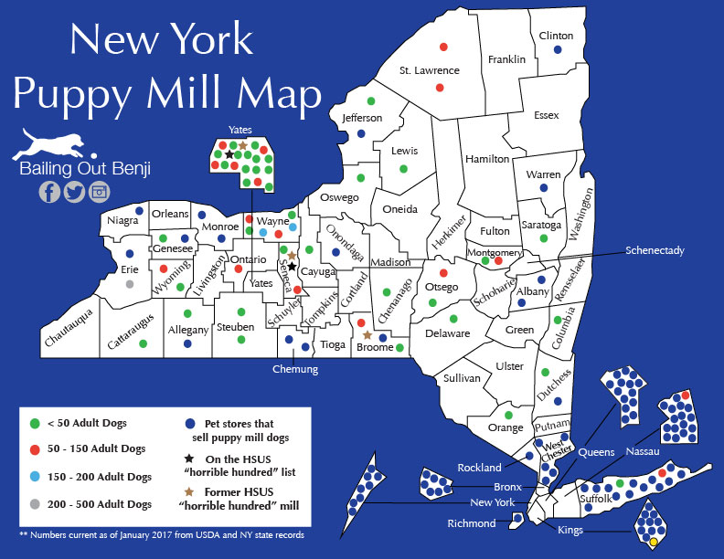 New York State Map With Counties And Cities.Puppy Mills By State Bailing Out Benji