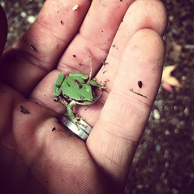 green frog in hand
