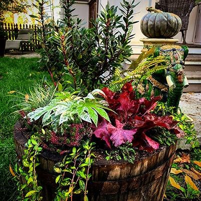 Flowers in wine barrel