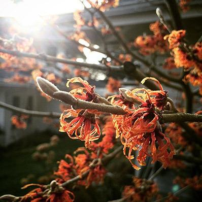 Spring growth on tree