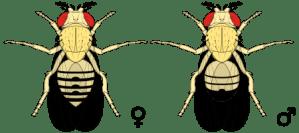 House, Drain & Fruit Flies | Bain Pest Control Service