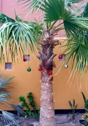 Lighted Palm with Baubles