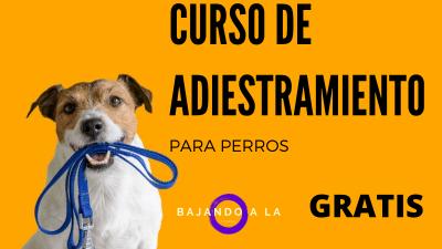 curso adiestramiento canino gratis