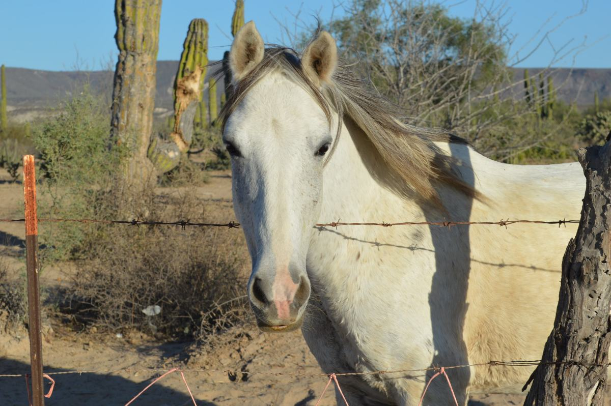Rescue Horses of San Juanico: A Photo Tour of Hearts Help Horses