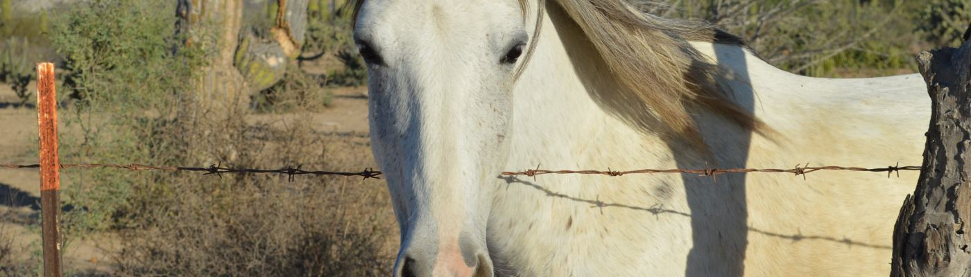 rescue horse in southern baja