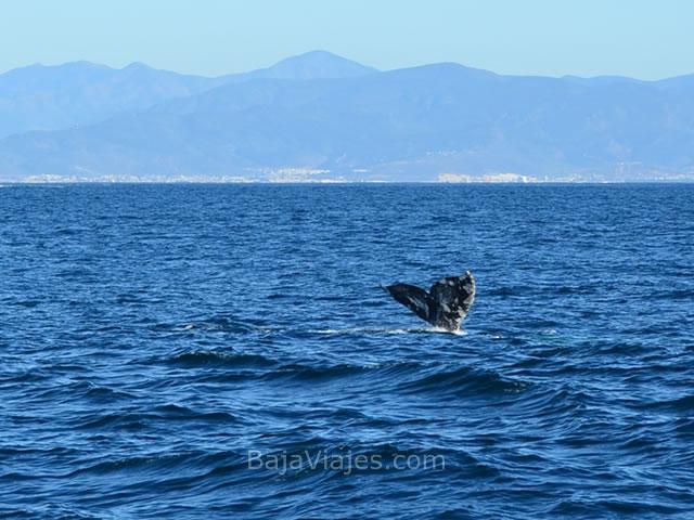 Tour al Avistamiento de Ballenas en Ensenada