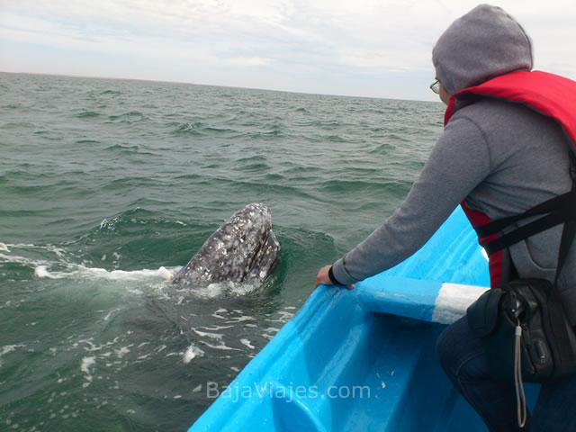 Experiencia de avistamiento de ballenas en Guerrero Negro, Baja California Sur.
