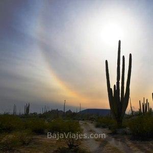 Cactus en Valle de Los Cirios, Baja California