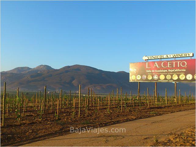 Viñedos de L. A. Cetto en Valle de Guadalupe, Ensenada, Baja California.