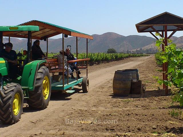 Recorrido enológico en Bodegas de Santo Tomás, en la Antigua Ruta del Vino.