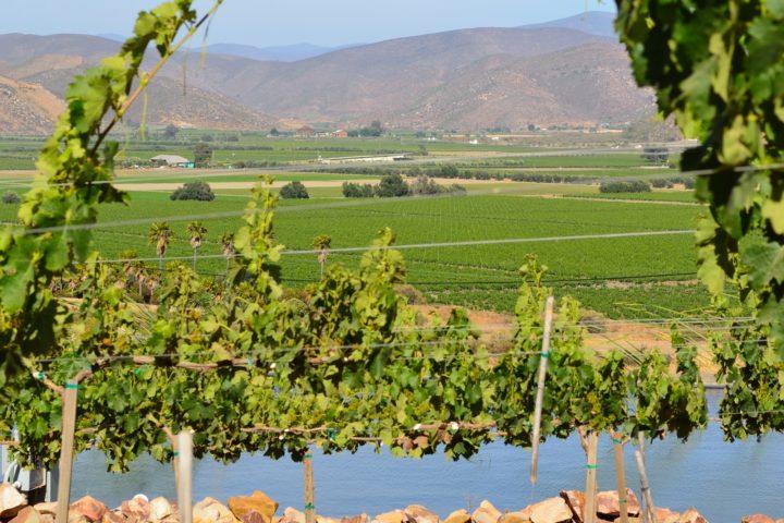 Vista del Valle de Guadalupe, desde Encuentro, en La Ruta del Vino.
