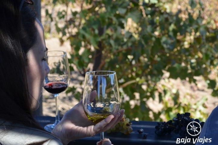 degustacion-antigua-ruta-vino-santo-tomas-tours