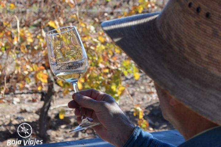 Degustación de vinos en el viñedo, durante el Tour al Valle de Santo Tomás.