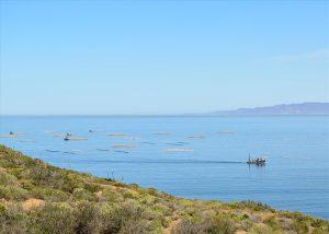 Granjas de piscicultura en la Bahía de Ensenada, vistas durante el Tour a La Bufadora