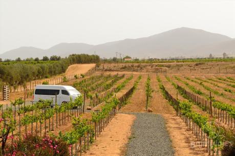 Transporte a la Ruta del Vino en Baja California