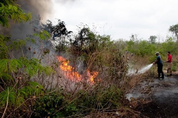 Guerrero registra 106 incendios forestales: Conafor